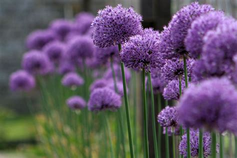 pretty flowers   world   names  pictures