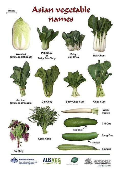 vegetables used in asian cooking 17 wonderful multicultural picture books about food