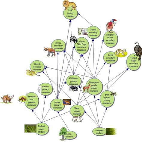 food web flowchart food web interactions the savanna