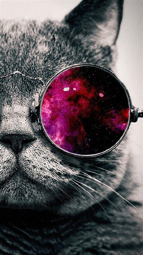wallpaper hd chat lunette iphone wallpaper black and white cat with colored glasses