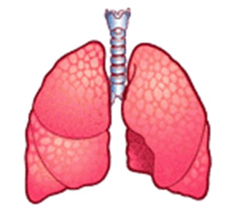 imagenes medicas gif gifs animados de pulmones animaciones de pulmones