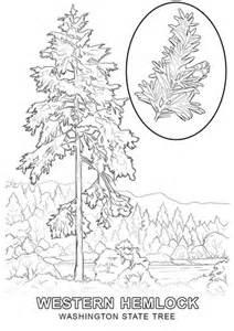 washington state tree coloring page  printable
