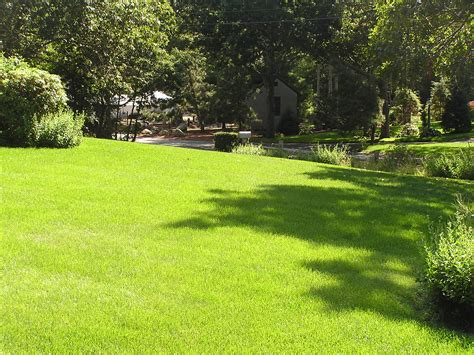 effective microorganisms for grass and lawns
