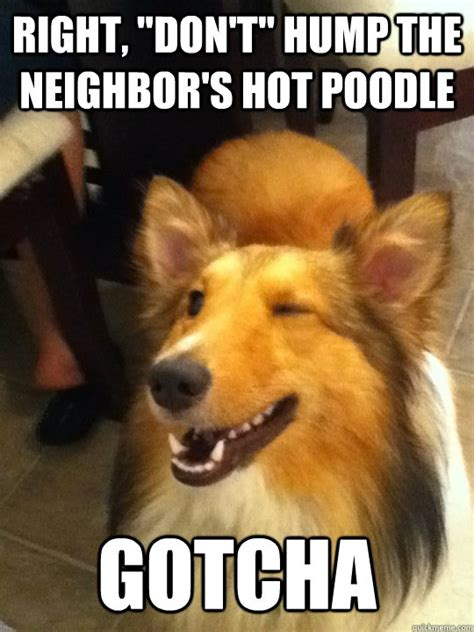 Meme Gotcha - right quot don t quot hump the neighbor s hot poodle gotcha