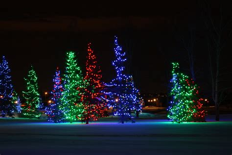 outdoor tree light shows lights at spruce in cowtown