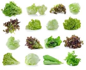 the gallery for gt lettuce types