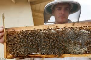 How To Keep Bees Or Bee Keeping In Rhode Island sweet los angeles plans to let homeowners keep bees on