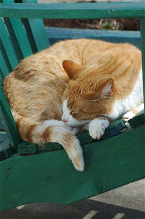 how to keep cats outdoor furniture keep cats outdoor furniture outdoor furniture