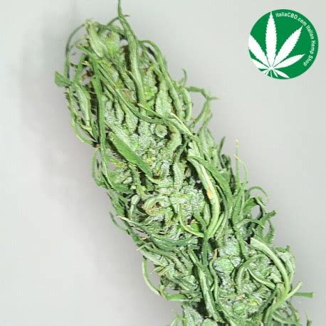 canapé italie le nostre variet 224 di cannabis associazione culturale sud