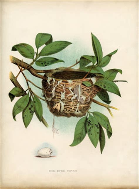 vintage printable lovely bird nest  egg natural history  graphics fairy