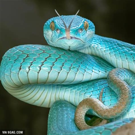 best 25 scary snakes ideas on pinterest all snakes diy