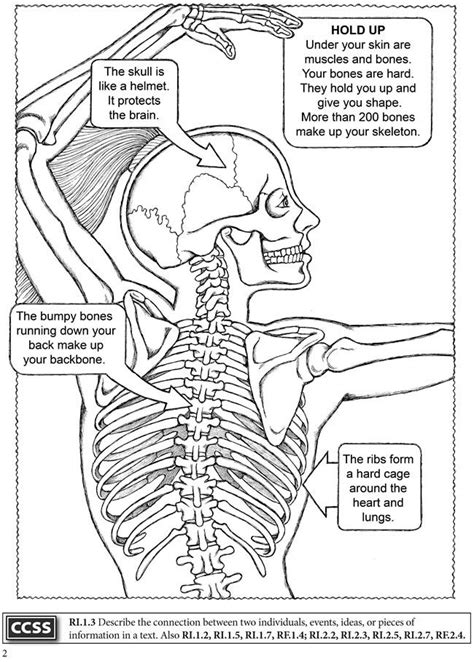 dover publications boost   human body
