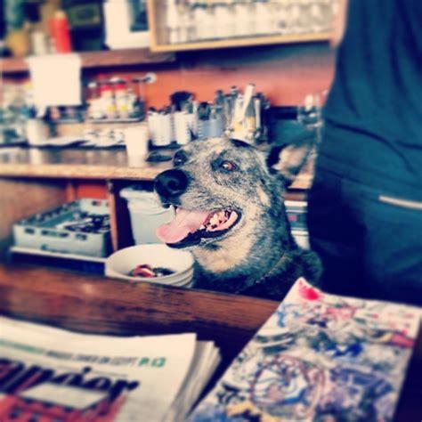 friendly restaurants seattle top pet friendly restaurants seattle pridebites