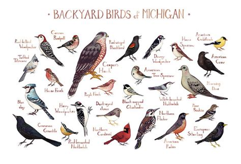 michigan backyard birds field guide art print watercolor