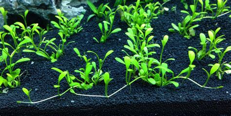 aquascape substrate aquascaping basics planted aquarium substrate