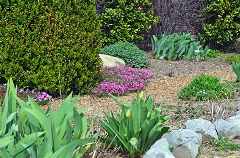 best flowering ground cover ideas