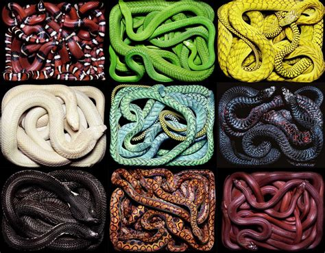 snake colors from the interwebs how not to do it