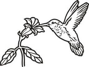 Hummingbird Outline Picture by Hummingbird Outline Clipart