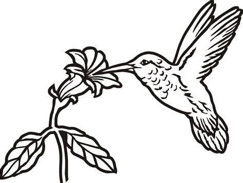 Hummingbird Outline Picture by Hummingbird Outline Pencil And In Color Hummingbird Outline