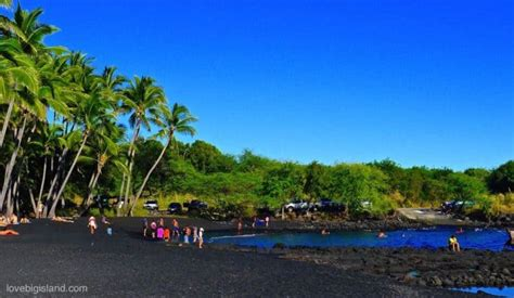 punaluu beach punalu u black sand beach big island turtles swimming