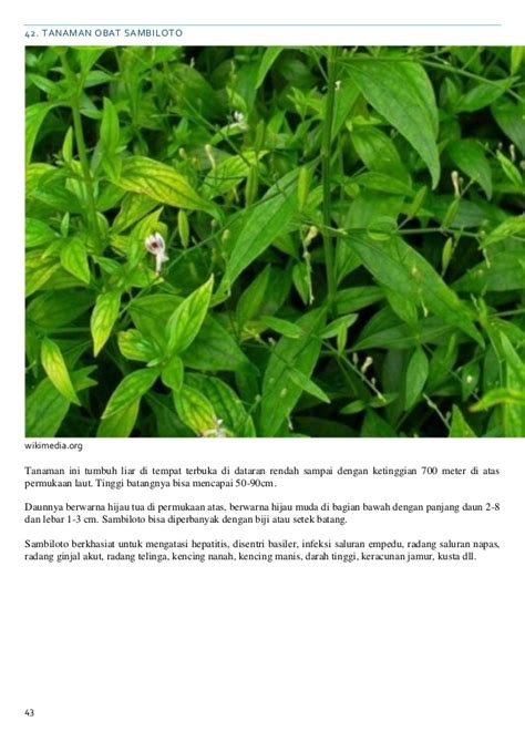 khasiat tanaman herbal
