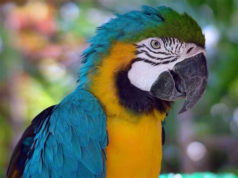 Wer Sich Papageien In Die Wohnung Holt Kann Exotik Live