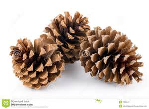 pine cones royalty free stock photography image 7250447