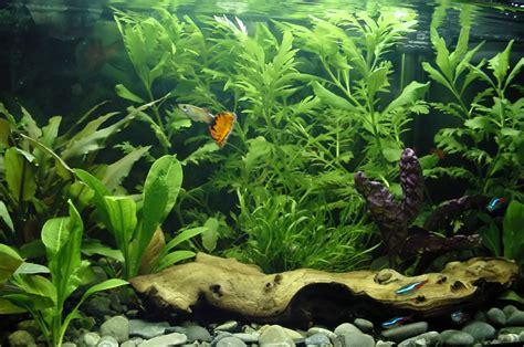 aquarium decoration aquarium fish fish