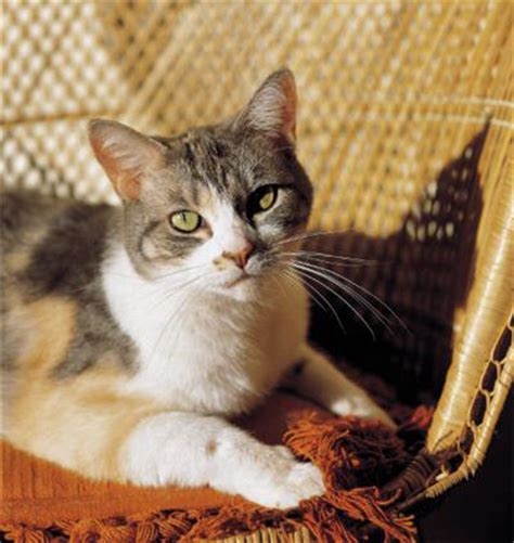 Cat Shed by Cat Shedding Top 7 Tips To Manage The Fallout Cat