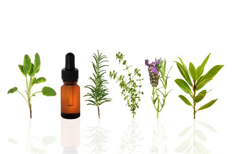 Essential Oils by Essential Oils Lifying A Great