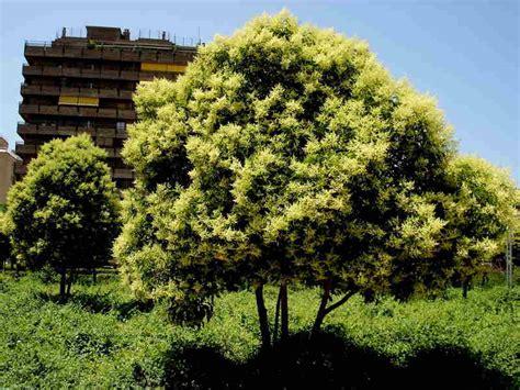 plantas para patio los mejores arboles resistentes al frio para tu patio