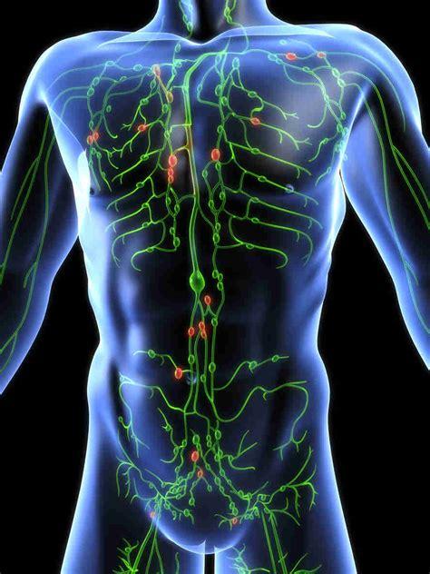 vasi linfatici gambe linfedema agli arti inferiori gambe e superiori braccia