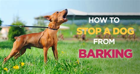 how to get dog to stop barking how to stop a dog from barking effective tips and tricks