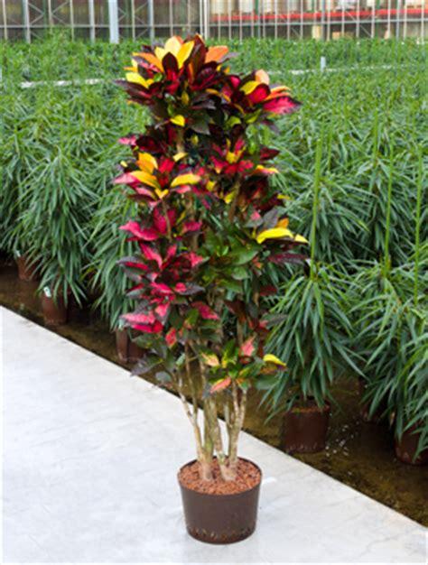 ausgefallene pflanzen garten besondere pflanzen green team dommelm hle ihr ganz pers