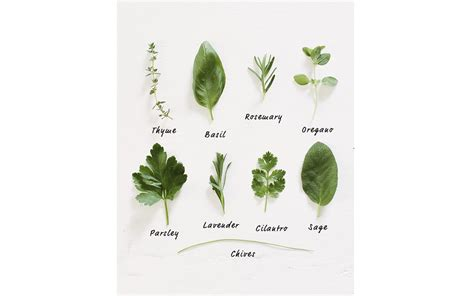 herbal academy using flavorful culinary herbs herbal tips for growing your own cooking herbs