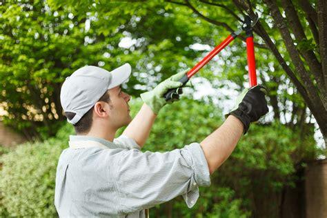 five types of tree pruning acer landscape services nashville landscape company