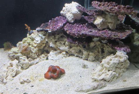 real reef shelf rock recreate  tonga   save