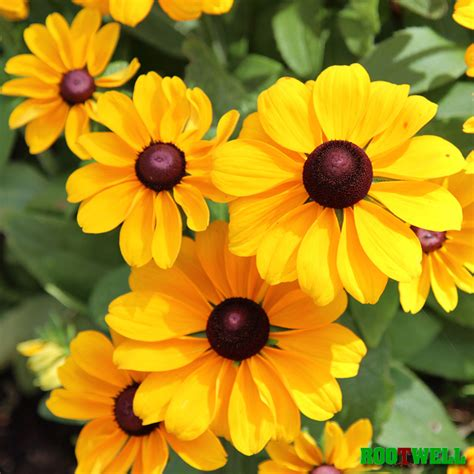 3 easy heat loving flowers to grow this summer