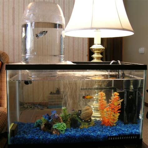 Handmade Aquarium - diy aquarium expansion tower petdiys