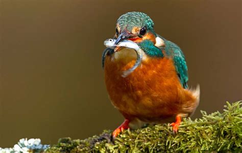 alimentazione uccelli l alimentazione degli uccelli