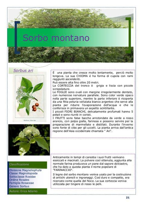 nomi piante e fiori nomi piante e fiori terrazzo con fiori e piante