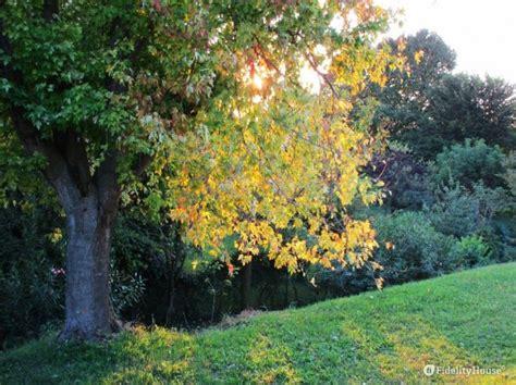 albero vanitoso albero vanitoso m 232 ches o colpi di sole fidelity foto
