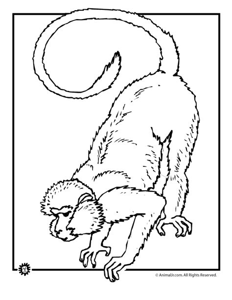 Realistic Jungle Animal Coloring Pages by Realistic Jungle Animals Coloring Pages