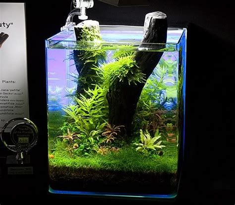 aquarium design exle 156 best images about planted nano aquariums on pinterest