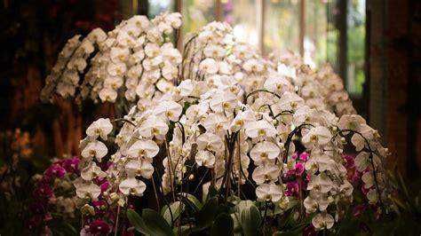 Blumen Für Sträuße 2749 by Die 93 Besten Hintergrundbilder Handy Blumen
