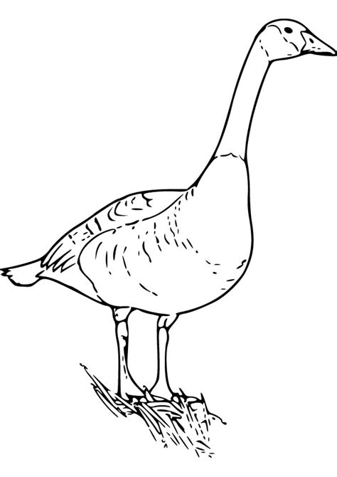 free coloring pages of to goose