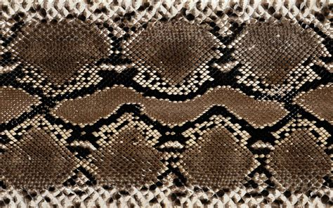wallpapers snake skin wallpapers wallpapers snake skin wallpapers