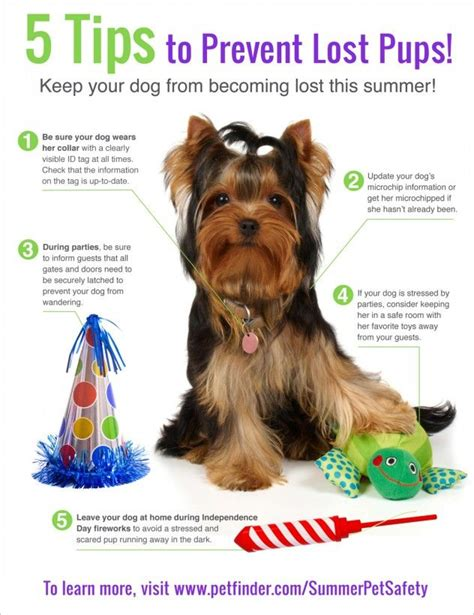 puppy basics 17 best images about info graphics on cats barking and therapy dogs