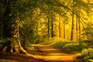 forest wall murals wallpaper forest mural from wallpaper murals is wonderful mural with