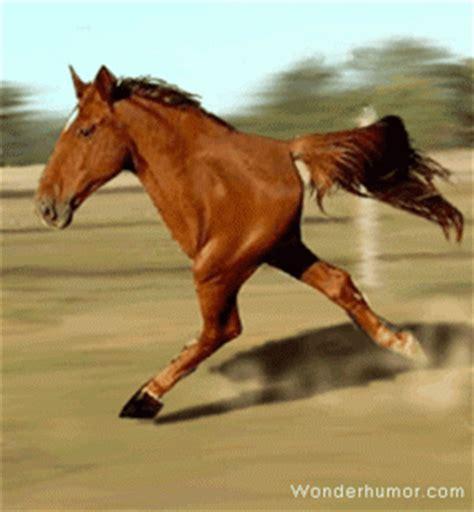 Kelinci Kaki S gambar animasi kuda bergerak lari dengan 2 kakinya
